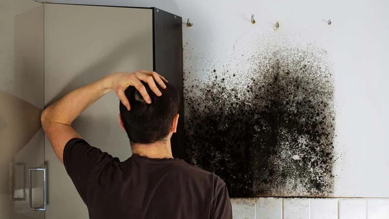 Как вывести грибок в жилом помещении?