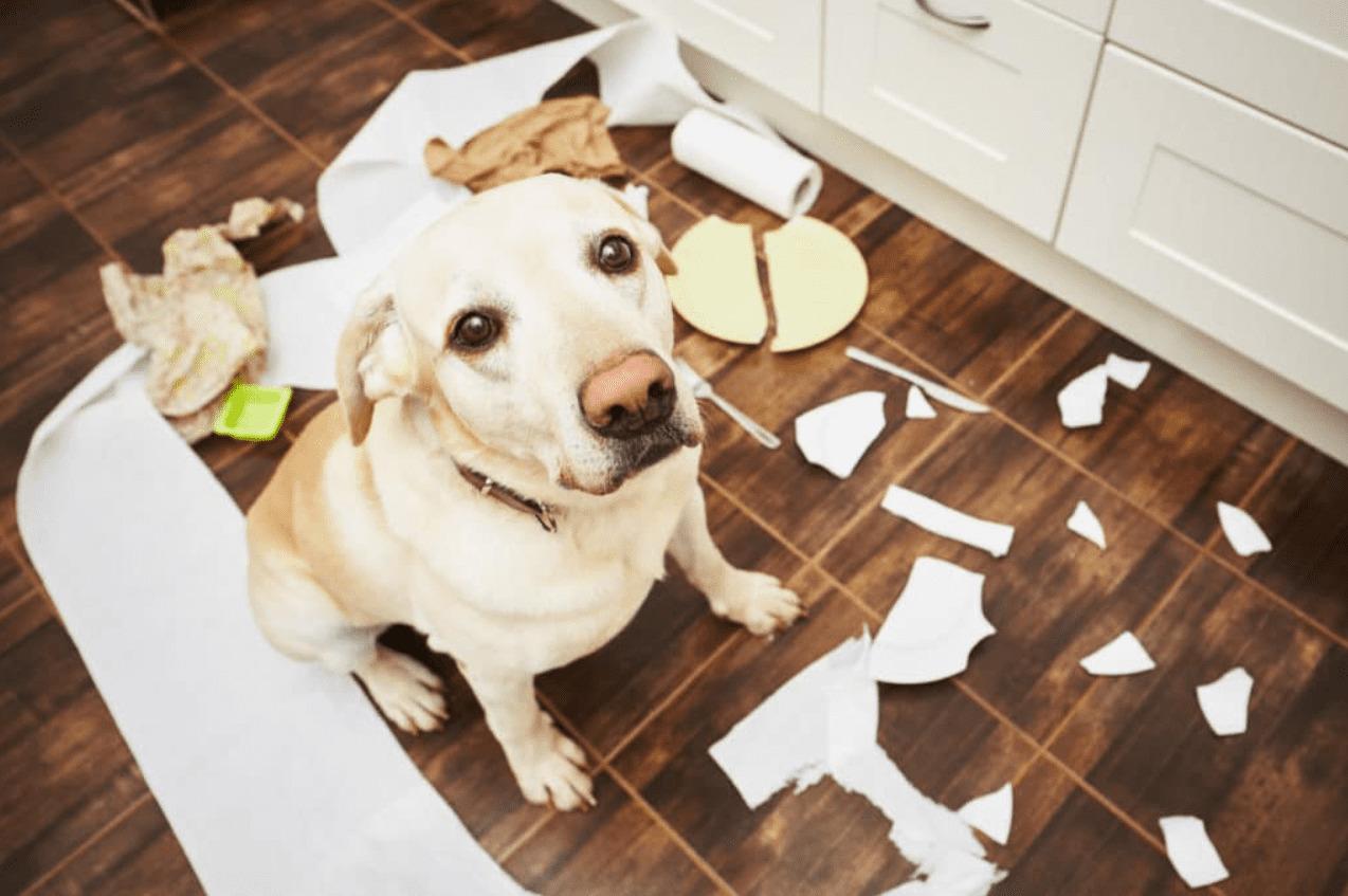 Животные в доме. Как добиться чистоты?